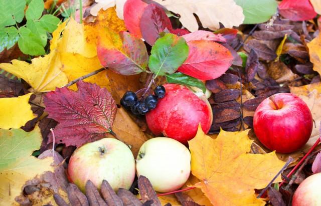Herbst ist Erntezeit!